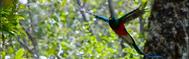 Los Quetzales N.P.