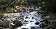Quetzal National Park Puntarenas Costa Rica Peaceful Mountain Stream
